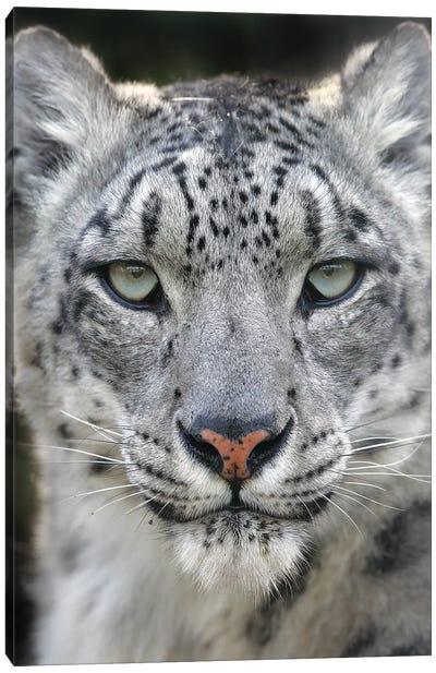 Leopard II Canvas Art Print