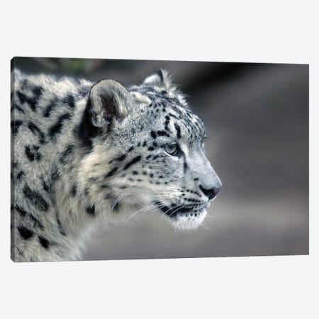 Leopard III Canvas Print #MIU231} by Miguel Lasa Canvas Art