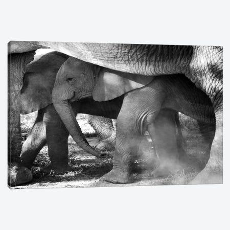 Elephant Tanzania Canvas Print #MIU233} by Miguel Lasa Canvas Art