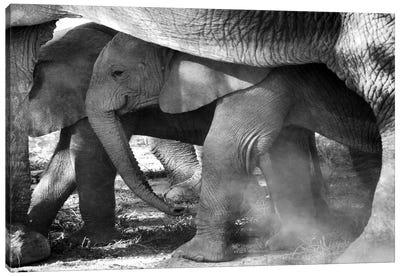 Elephant Tanzania Canvas Art Print
