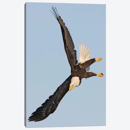 Eagle Alaska VI Canvas Print #MIU24} by Miguel Lasa Canvas Artwork