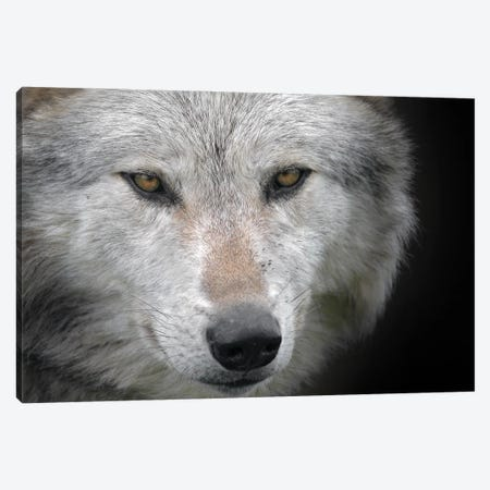 Wolf Scotland Canvas Print #MIU250} by Miguel Lasa Canvas Wall Art