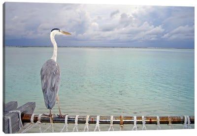 Heron Maldives Canvas Art Print
