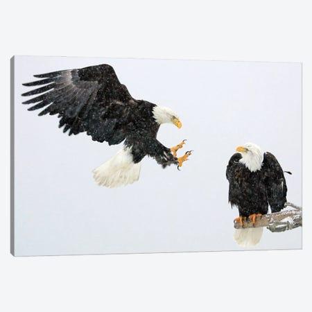 Eagle Alaska VII Canvas Print #MIU25} by Miguel Lasa Canvas Wall Art