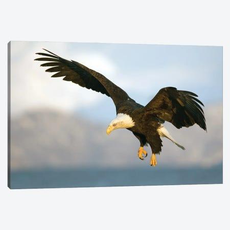 Eagle Alaska IX Canvas Print #MIU36} by Miguel Lasa Canvas Art Print
