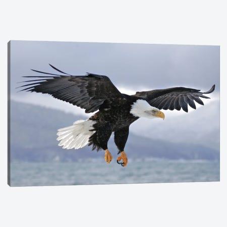Eagle Alaska I Canvas Print #MIU8} by Miguel Lasa Art Print