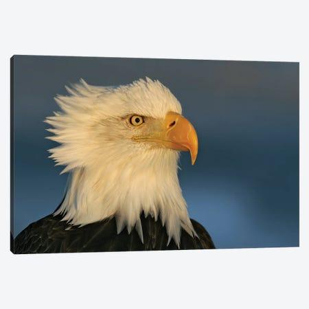 Eagle Alaska II Canvas Print #MIU9} by Miguel Lasa Canvas Print