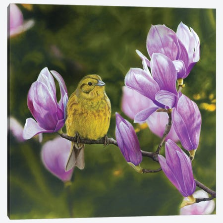 Yellowhammer III Canvas Print #MIV101} by Mikhail Vedernikov Canvas Artwork