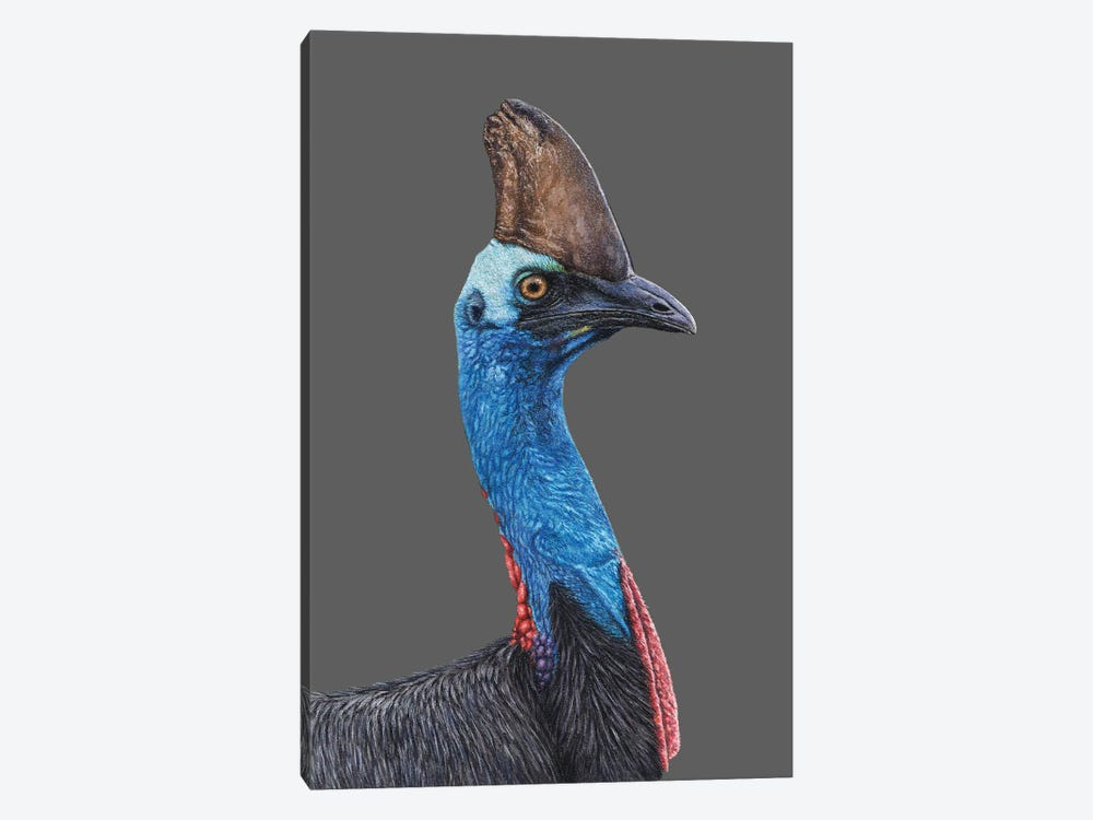 Southern Cassowary 1-piece Canvas Print