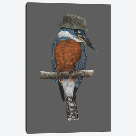 Ringed Kingfisher Canvas Print #MIV109} by Mikhail Vedernikov Canvas Artwork
