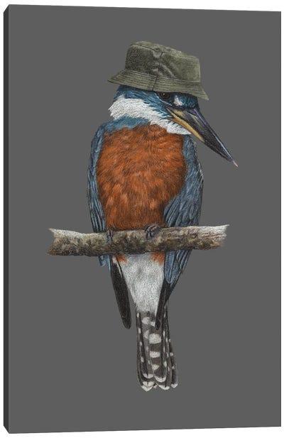Ringed Kingfisher Canvas Art Print