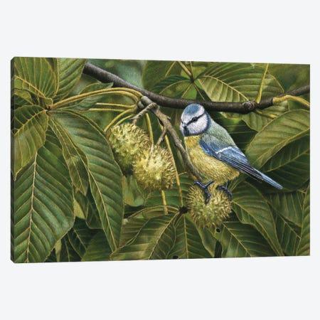 Blue Tit Canvas Print #MIV11} by Mikhail Vedernikov Canvas Art Print
