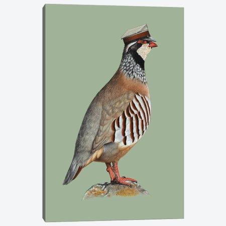 Red-Legged Partridge Canvas Print #MIV120} by Mikhail Vedernikov Canvas Wall Art