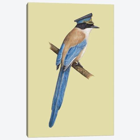 Azure-Winged Magpie Canvas Print #MIV124} by Mikhail Vedernikov Canvas Print