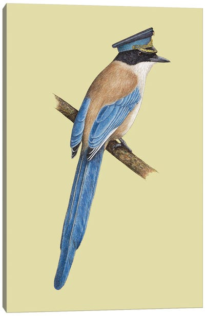 Azure-Winged Magpie Canvas Art Print