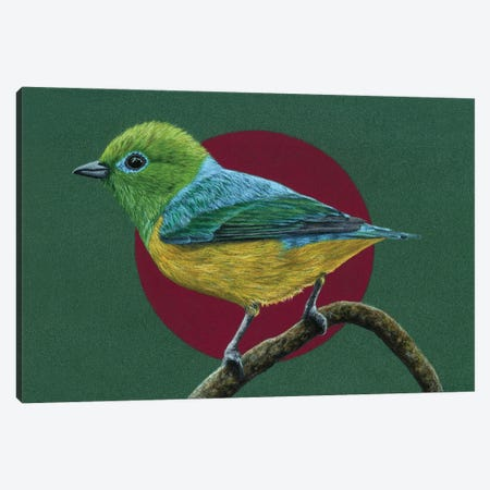 Blue-Naped Chlorophonia Canvas Print #MIV12} by Mikhail Vedernikov Canvas Print