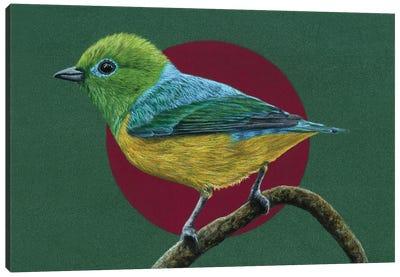 Blue-Naped Chlorophonia Canvas Art Print