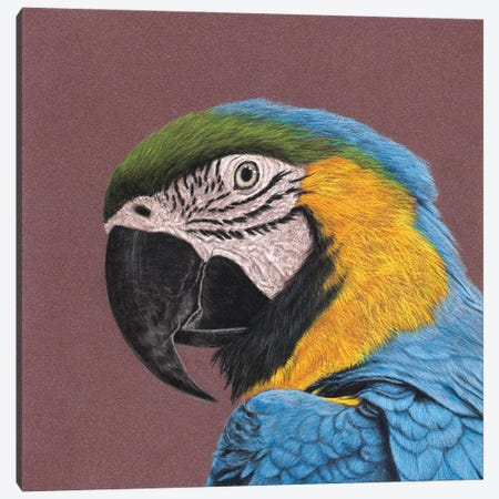 Blue-And-Yellow Macaw Canvas Print #MIV133} by Mikhail Vedernikov Canvas Art Print