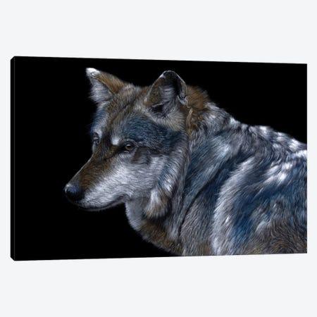 Mexican Wolf Canvas Print #MIV145} by Mikhail Vedernikov Canvas Print