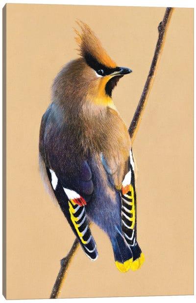 Bohemian Waxwing Canvas Art Print