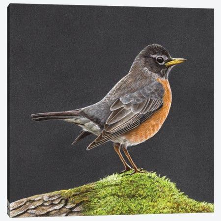 American Robin Canvas Print #MIV151} by Mikhail Vedernikov Canvas Art Print