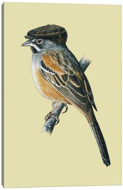 Bridled Sparrow Canvas Art Print