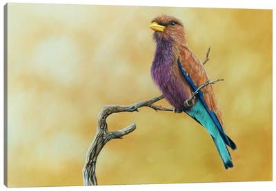 Broad-Billed Roller Canvas Art Print