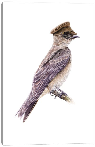 Brown-Chested Martin Canvas Art Print