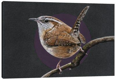 Carolina Wren Canvas Art Print