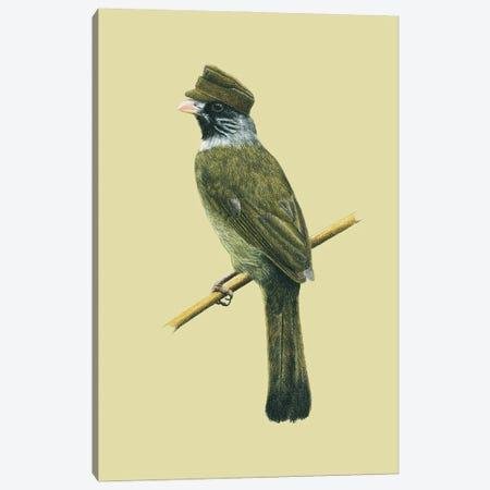 Collared Finchbill Canvas Print #MIV23} by Mikhail Vedernikov Canvas Artwork