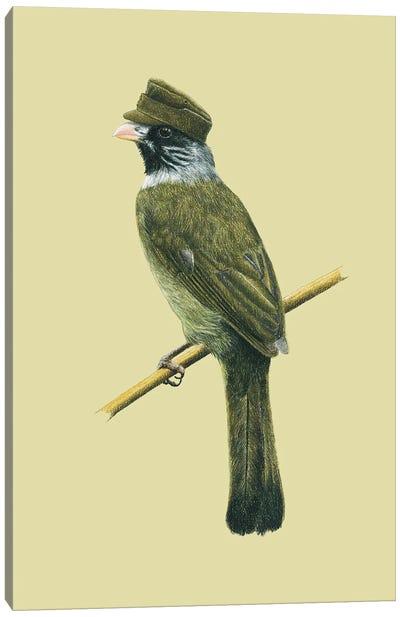 Collared Finchbill Canvas Art Print
