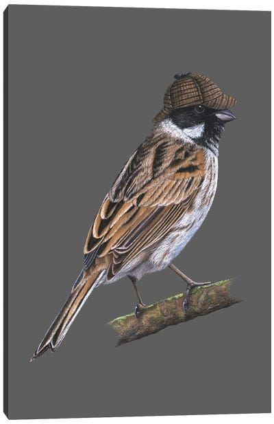 Common Reed Bunting Canvas Art Print