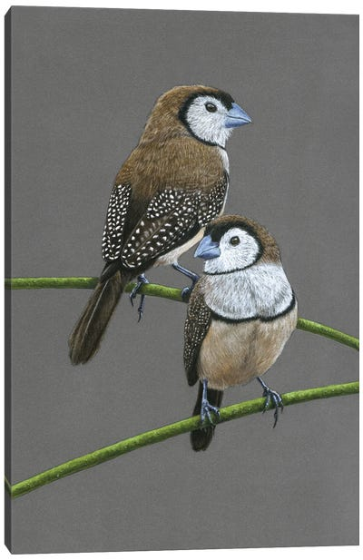Double-Barred Finches Canvas Art Print