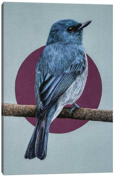 Dull-Blue Flycatcher Canvas Art Print
