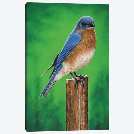 Eastern Bluebird Canvas Print #MIV30} by Mikhail Vedernikov Art Print