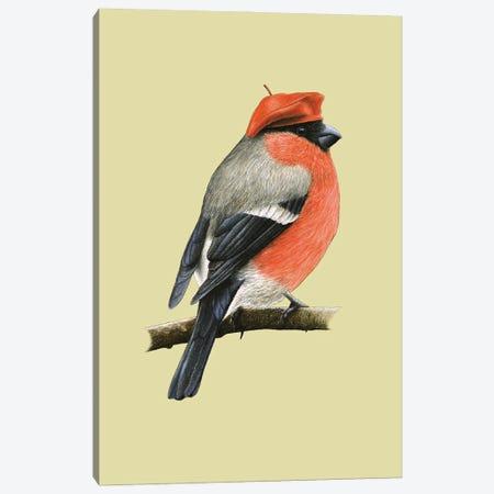 Eurasian Bullfinch Canvas Print #MIV31} by Mikhail Vedernikov Canvas Print