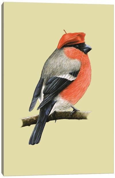 Eurasian Bullfinch Canvas Art Print
