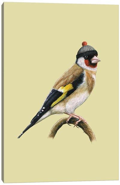 European Goldfinch Canvas Art Print