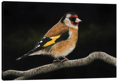 European Goldfinch#2 Canvas Art Print