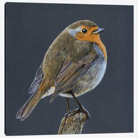 European Robin Canvas Print #MIV37} by Mikhail Vedernikov Canvas Wall Art