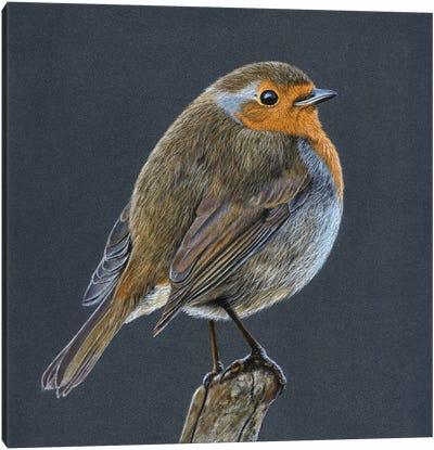 European Robin Canvas Art Print