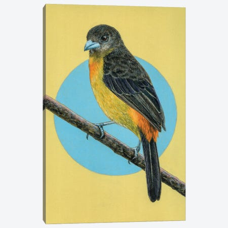 Flame-Rumped Tanager 3-Piece Canvas #MIV39} by Mikhail Vedernikov Canvas Art Print