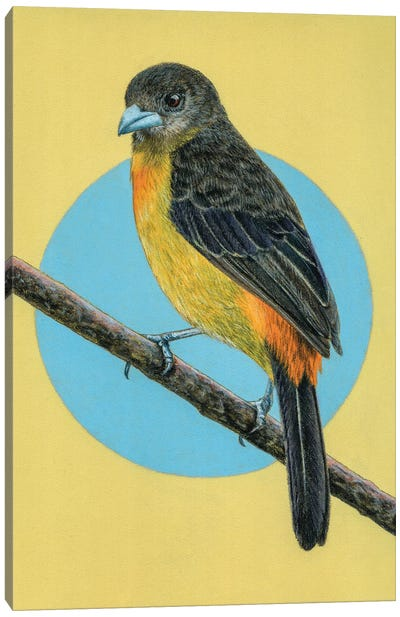 Flame-Rumped Tanager Canvas Art Print