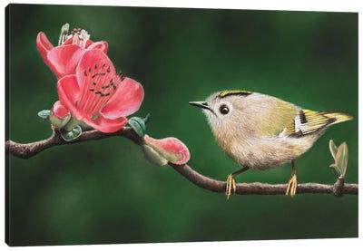 Goldcrest Canvas Art Print