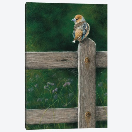 Hawfinch Canvas Print #MIV48} by Mikhail Vedernikov Canvas Artwork
