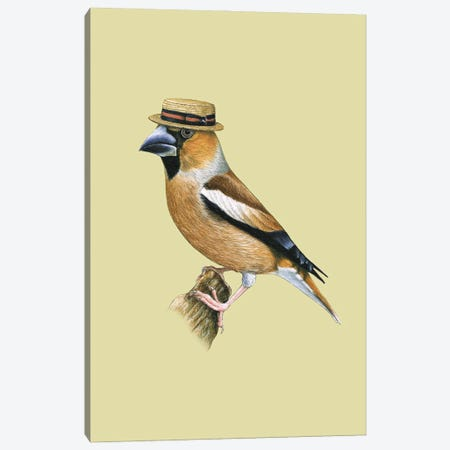 Hawfinch#2 Canvas Print #MIV49} by Mikhail Vedernikov Canvas Wall Art