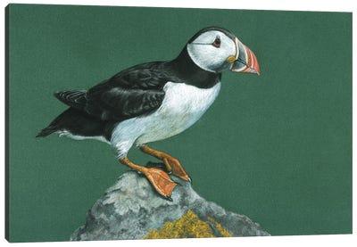 Atlantic Puffin Canvas Art Print