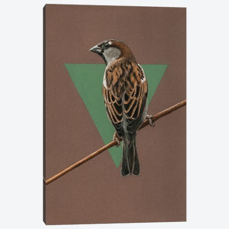 House Sparrow Canvas Print #MIV52} by Mikhail Vedernikov Art Print
