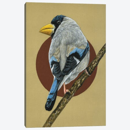 Japanese Grosbeak Canvas Print #MIV55} by Mikhail Vedernikov Canvas Art