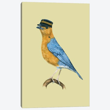 Orange-Headed Thrush Canvas Print #MIV63} by Mikhail Vedernikov Canvas Artwork